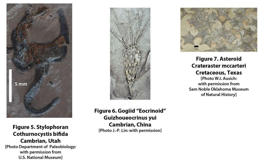 FossilPlate2