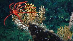 Image credit: Schmidt Ocean Institute